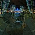 写真: 青葉シンボルロード イルミネーション(4)