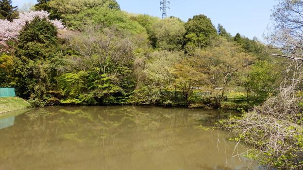 五郎池という名の池