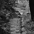 写真: 森の小道