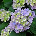 Photos: 咲きだし