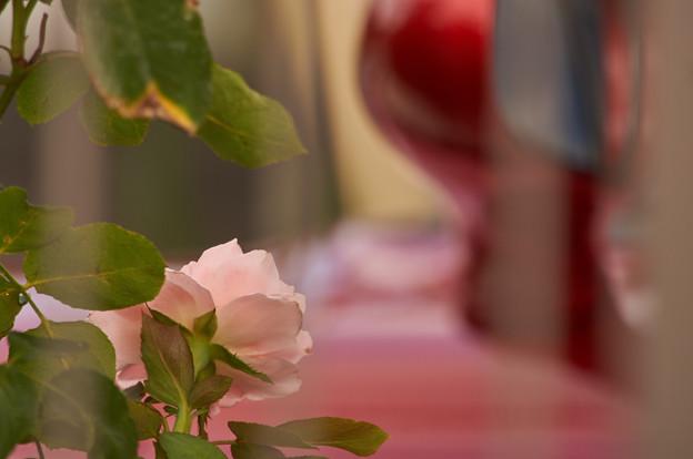 写真: バラと赤い車