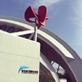 写真: 150127 東京辰巳国際水泳場