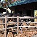 Photos: ピカピカの馬