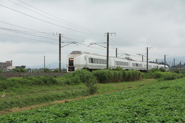 夏の畑を行く651系K105編成急行ロックインジャパン号 (1)