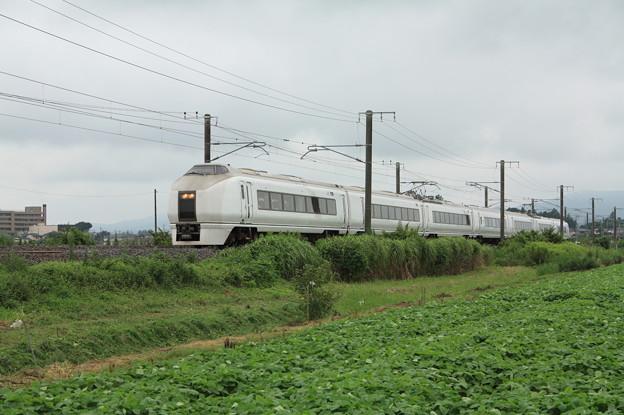 夏の畑を行く651系K105編成急行ロックインジャパン号 (2)