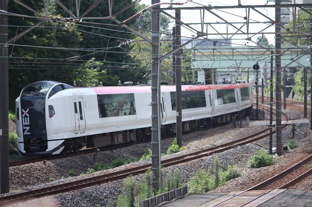 E259系Ne?編成 成田エクスプレス
