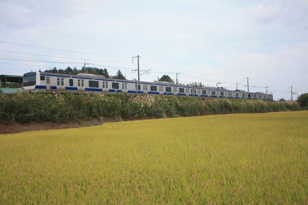 黄金の稲を行くE531系 (2)