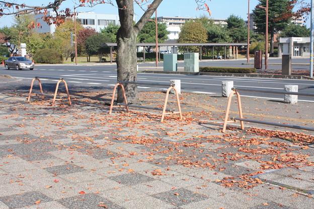 県庁付近に落ちていた落ち葉