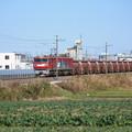 畑の中を行くEH500-14牽引5094レ安中貨物 (1)
