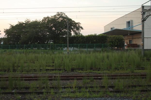 友部駅の線路に雑草が (1)