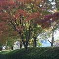 色づく紅葉 (2)
