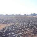 冬の田園風景 (1)