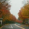 Photos: 愛宕の並木道はまだきれいだった