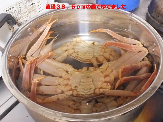 石川県では加能ガニと呼ぶのだそうです