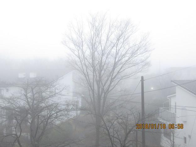 今朝は窓の外が一面霧の中だった。