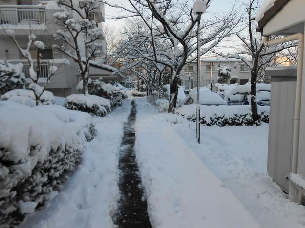 団地内の通路の除雪