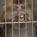 お猿さんの顔~♪