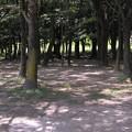 木漏れ日~♪