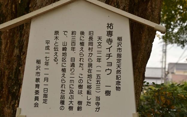 稲沢市指定の銀杏の説明~