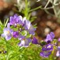 写真: 春の花が~