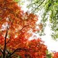 写真: 昭和記念公園の紅葉_1