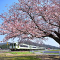 釜石線 綾織の桜