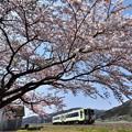 釜石線 綾織の桜2