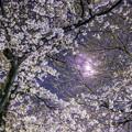 写真: 桜月夜
