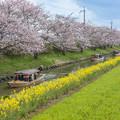 写真: 春の水郷めぐり