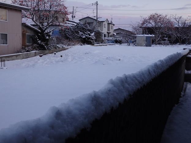 今日も雪が