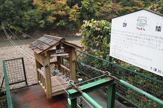 十津川村の野猿