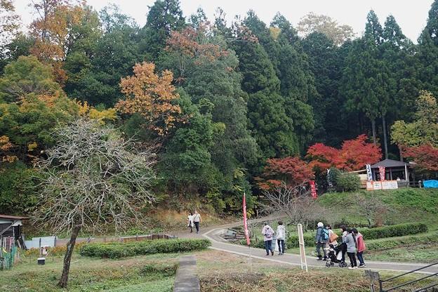 鶏足寺の紅葉(散策路)