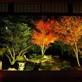 勝林寺ライトアップ