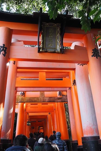 写真: 伏見稲荷大社