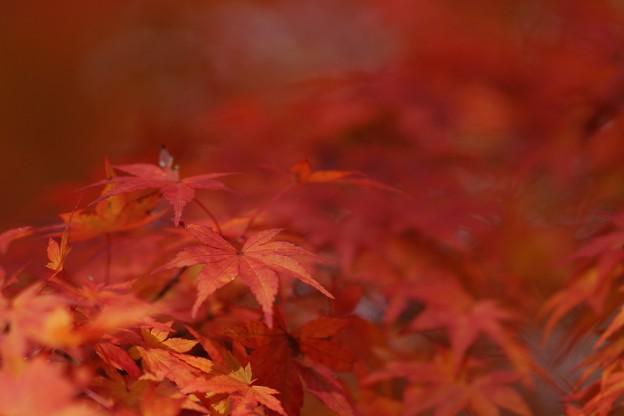 写真: 紅葉まつり02