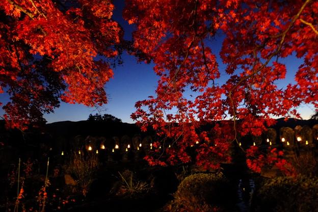 秋といえば紅葉ライトアップ