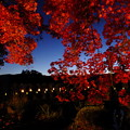 Photos: 秋といえば紅葉ライトアップ