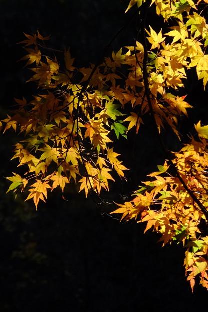 鎌倉で見た美しい夢