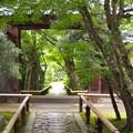 Photos: 真夏の光悦寺
