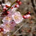 Photos: 希望の春