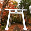写真: 神社之秋