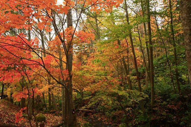 山谷裡的秋色