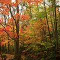 写真: 山谷裡的秋色