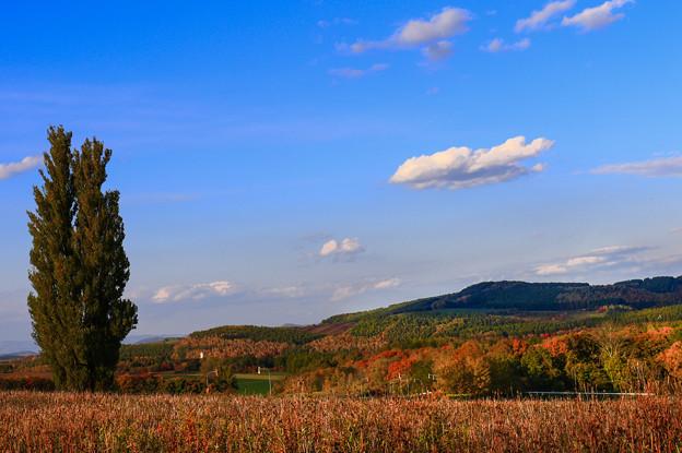 秋天丘陵上的樹