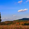 写真: 秋天丘陵上的樹