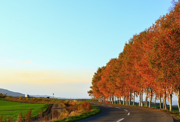 秋色流轉的公路