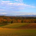 写真: 秋天的夢田
