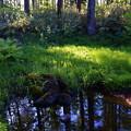 ビオトープ池全景