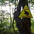 写真: 熊出没注意