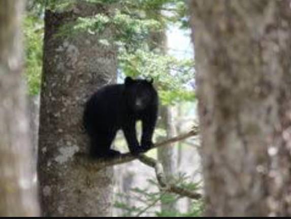 写真: 今年も子熊がいました。